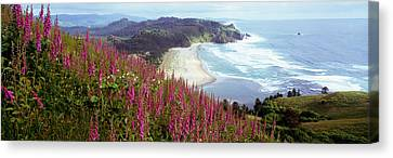 Foxglove Flowers Canvas Print - Foxgloves At Cascade Head, Tillamook by Panoramic Images