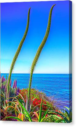 Canvas Print featuring the photograph Foxtails On The Pacific by Jim Carrell