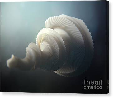Fractal Seashell  Canvas Print by Pixel  Chimp