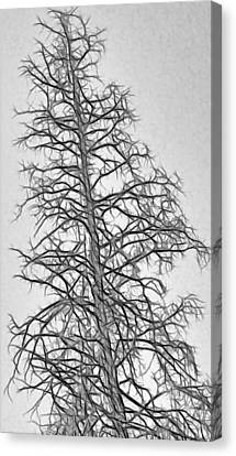 Fractal Tree Abstract Canvas Print by Steve Ohlsen