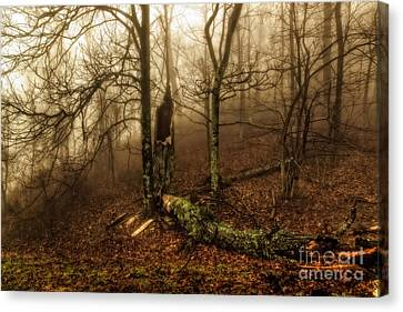 Fractured In Fog Canvas Print by Deborah Scannell