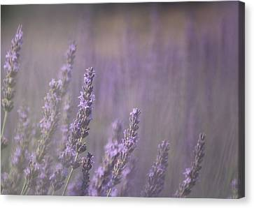 Canvas Print featuring the photograph Fragrance by Lynn Sprowl