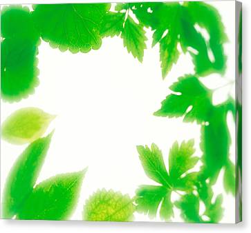 Frame Of Fresh Green Leaves On Shiny Canvas Print by Panoramic Images