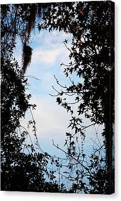 Frame Canvas Print