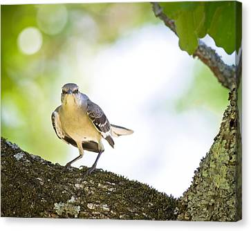 Framed Canvas Print by Annette Hugen