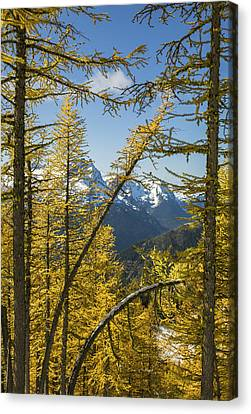 Framed By Color Canvas Print by Ross Murphy