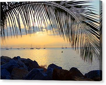 Framed By Fronds Canvas Print
