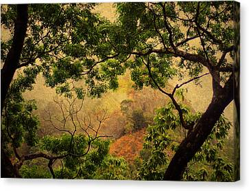Framing Tree Branches Canvas Print by Jenny Rainbow