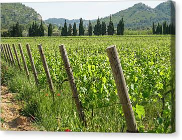 Grapevines Canvas Print - France, Luberon, Provence, Vineyards by Emily Wilson