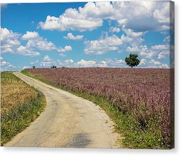 France, Provence, Country Backroad Canvas Print