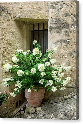 Flower Boxes Canvas Print - France, Provence, Lacoste, Town Scenes by Terry Eggers