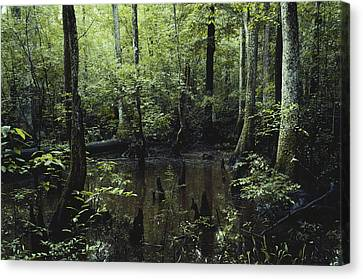 Francis Beidler Forest Canvas Print