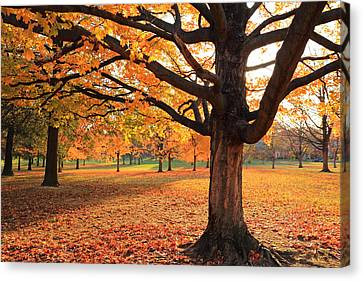 Canvas Print featuring the photograph Francis Park Autumn Maple by Scott Rackers