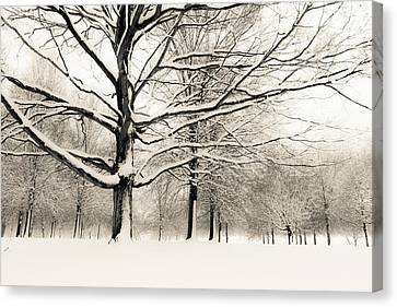 Francis Park In Snow Canvas Print by Scott Rackers