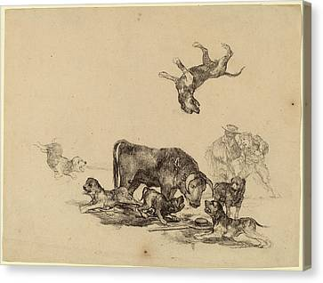 Francisco De Goya, Bull Attacked By Dogs Canvas Print