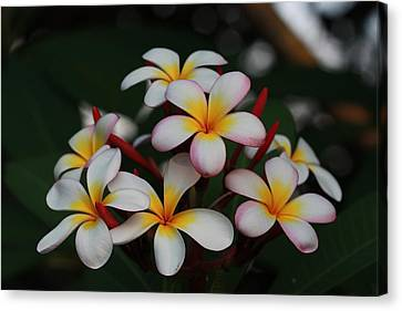 Canvas Print featuring the photograph Frangipani Bouquet by Keith Hawley