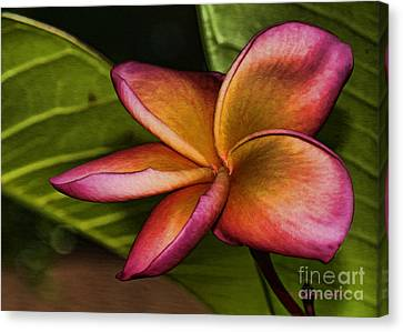 Frangipani Creation Canvas Print by Deborah Benoit