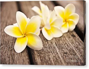 Exoticism Canvas Print - Frangipani Flower by Delphimages Photo Creations