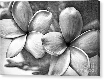 Frangipani In Black And White Canvas Print by Peggy Hughes