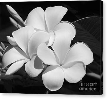 Florida Flowers Canvas Print - Frangipani In Black And White by Sabrina L Ryan