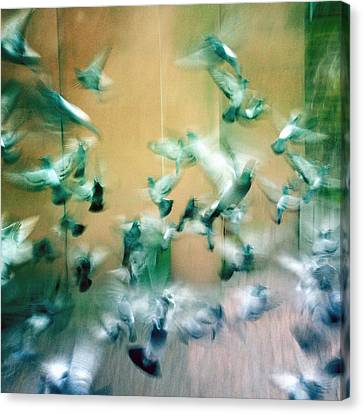 Frantic Wing Beats - Many Scared Pigeons Canvas Print by Matthias Hauser