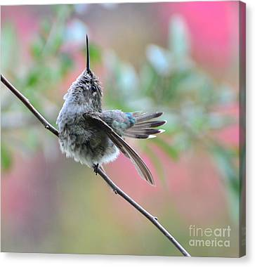 Canvas Print featuring the photograph Fredrick Singing In The Rain by Debby Pueschel