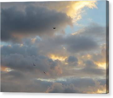 Canvas Print featuring the photograph Free As A Bird by Jean Marie Maggi