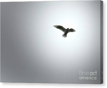 Canvas Print featuring the painting Free Bird by Gregory Dyer