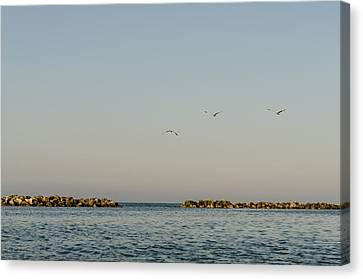 Flight Canvas Print - Freedom by Andrea Mazzocchetti