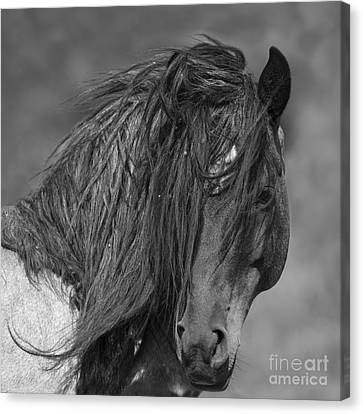 Stallion Canvas Print - Freedom Close Up by Carol Walker