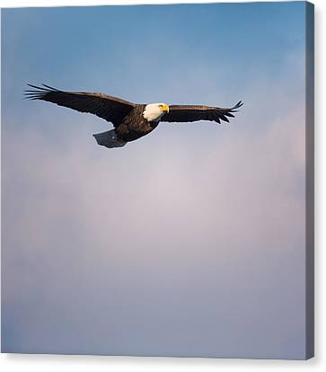 Freedom Flier Square Canvas Print by Bill Wakeley