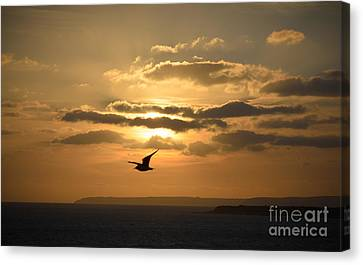 Freedom Canvas Print by OUAP Photography