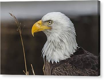 Canvas Print featuring the photograph Freedom's Spirit by Perspective Imagery