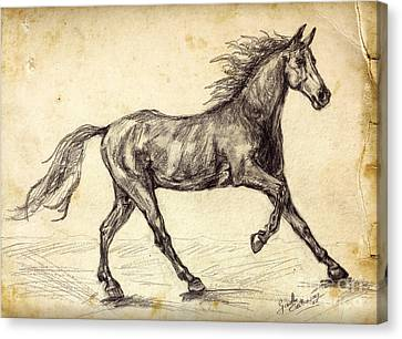 Freehand Graphite Horse Study Canvas Print by Ginette Callaway
