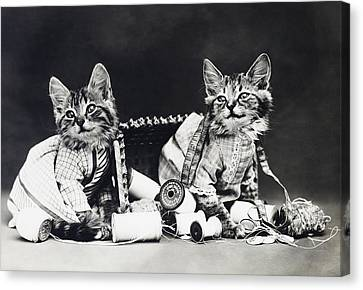 Frees Kittens, C1915 Canvas Print by Granger