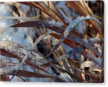 Freeze Dried Canvas Print by Steven Milner