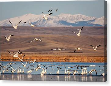 Canvas Print featuring the photograph Freeze Out Lake Morning by Jack Bell