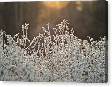 Freezing Cold Canvas Print by Karen Grist