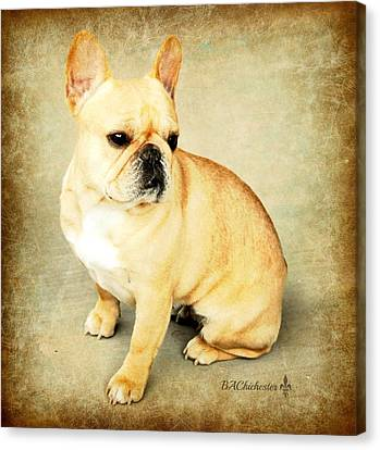 Canvas Print featuring the photograph French Bulldog Antique by Barbara Chichester