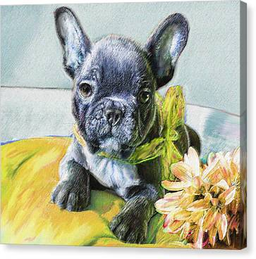French Bulldog Puppy Canvas Print by Jane Schnetlage