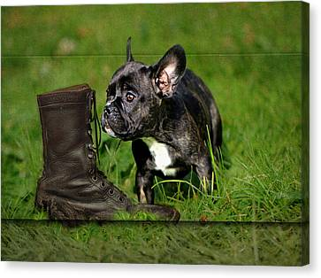 Dog Canvas Print - French Bulldogs by Heike Hultsch
