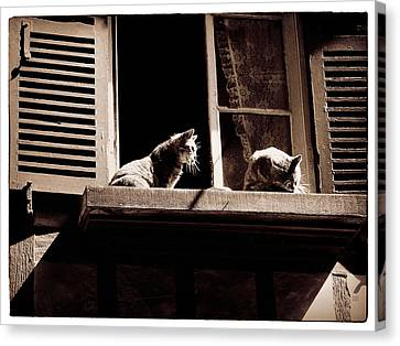 French Windowsill Cats In The Sun Canvas Print