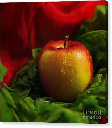 Fresh Apple On Silk Canvas Print by Wobblymol Davis