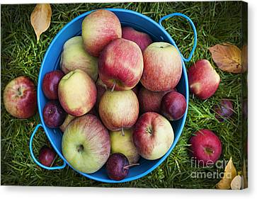 Fresh Apples Canvas Print