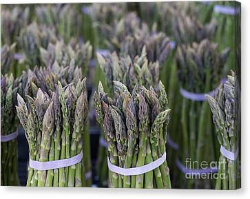 Fresh Asparagus Canvas Print by Mike  Dawson