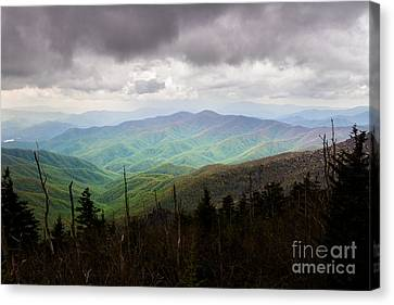 Fresh Beginnings  Canvas Print by Deborah Scannell