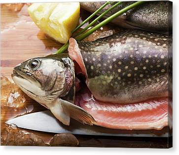 Brook Trout Image Canvas Print - Fresh Brook Charr With Lemon by Foodcollection