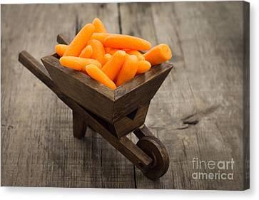 Fresh Carrots In A Miniature Wheelbarrow  Canvas Print