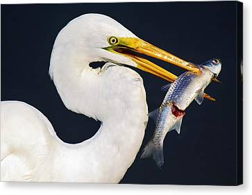 Fresh Catch Of The Day Canvas Print by Paulette Thomas