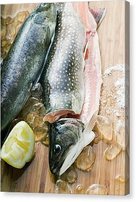 Brook Trout Image Canvas Print - Fresh Charr, Lemon And Ice Cubes by Foodcollection